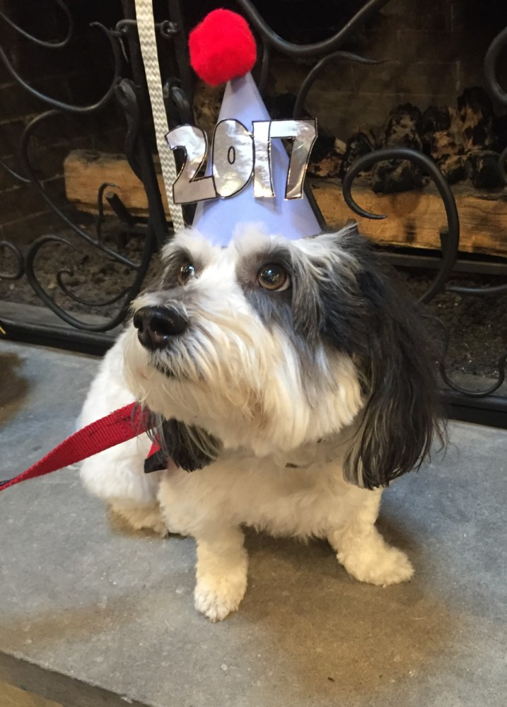 McNugget, the House Dog wearing a party hat