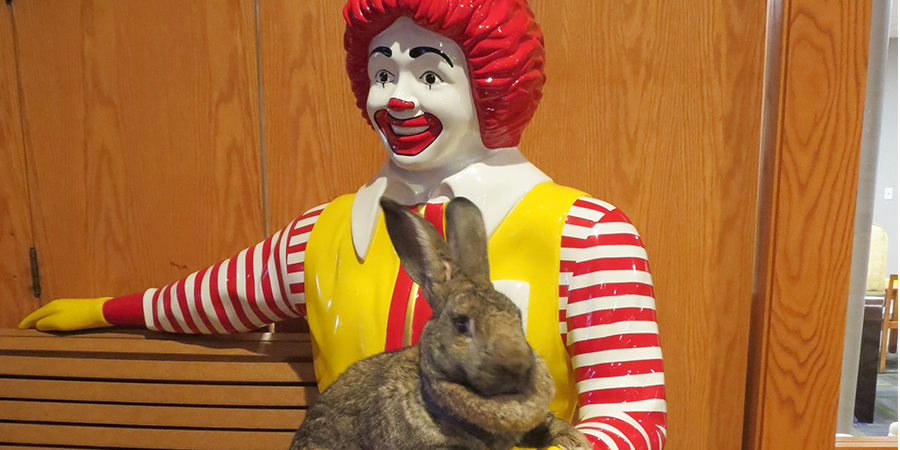 Pet therapy bunny and Ronald McDonald